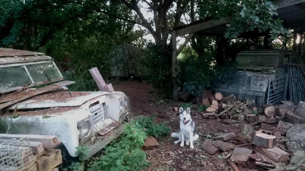 hond bij oude jeeps Steveddon farm camping