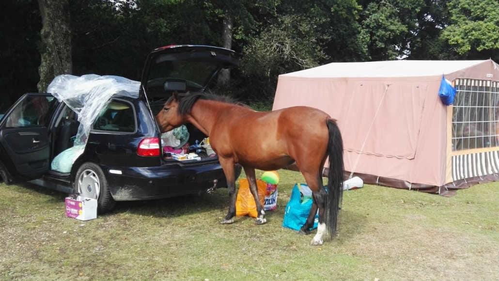 New Forest Ashurst campsite UK